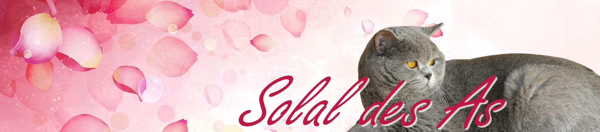Solal_des_As1
